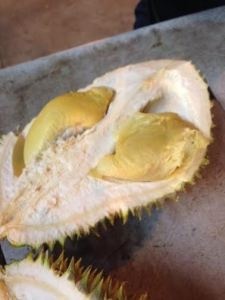 durian4